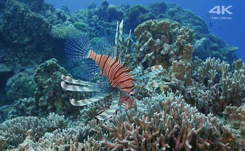 Sony Beautiful Sea In Okinawa